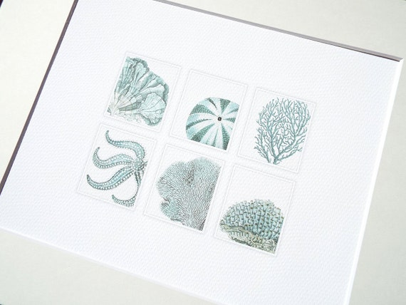 Pale Blue Sea Life Collection of Coral, Shell & Starfish Fine 8 X 10 Art Print