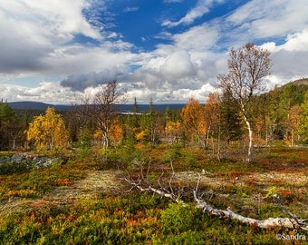 Nature wall art, Lapland tunturi, autumn day in Lapland, Finland, high quality print, autumn colors, red, yellow wild Finnish nature
