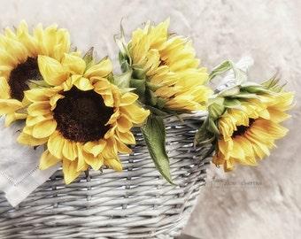 Sunflower Photograph, Yellow and Grey Wall Art, Farmhouse & Nursery Decor, Rustic Botanical Print, Nature Photography | 'Country Sunshine'