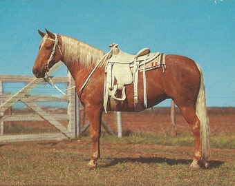 Summer Whites - Vintage 1950s Plastichrome Western Palomino Glam Horse Postcard