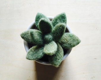Needle Felted Succulent // Succulent with Handmade Porcelain Cup // Felted Succulent