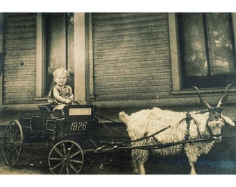 Baby in Traveling Goat Cart Antique Photo
