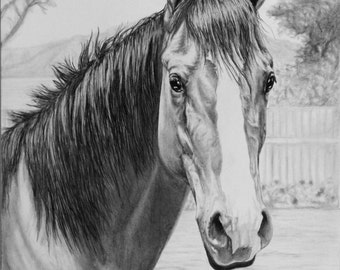 Horse Portrat in Graphite Pencil