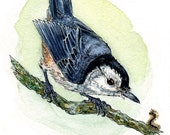 "White-Breasted Nuthatch- 5""x7"" Fine Art Print of Original Pen and Ink Watercolor Bird Drawing"