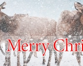 Merry Christmas - Facebook Timeline Cover With Holiday Greetings For Your Personal Page -Elk In A Snow Storm -Instant Download