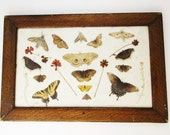 Victorian Butterfly, Flower and Moth Collection - Faux Wood Frame - Cotton Batting Back - Dried Flowers - Butterflies - Preserved Specimens
