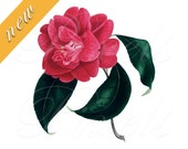 CAMELLIA red Instant Download Digital red flower collage Image large wedding clipart no.464