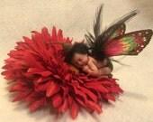 Ooak sleeping fairy boy baby art doll sculpture little forest Fae prince red flower