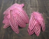 8 Dyed Pink Silver Pheasant Feathers ~ Cruelty Free