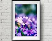 Purple Delight Flower Print, Fine Art Print, Nature Photography, Wall Art, Flower, Wall Deco, Home Deco, Floral, Outdoor, Purple
