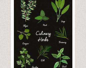 Culinary Herbs Art Print - Kitchen Art Home Decor
