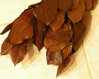 Preserved COPPER Brown SALAL, (Lemon Leaf)  Bunch, 4 oz , Craft Supplies, Natural Supplies, DIY