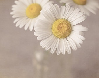 """Flower Photograph, Daisy Flowers in Vase, Fine Art Photography Print, white, yellow, tan, shabby chic wall art, 8x10 - 20x24, """"Darling"""""""