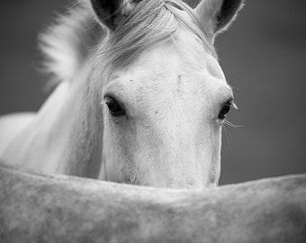 White horse photo, horse photography, black and white horse photo, equine art, horse art