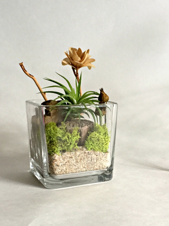 Cube glass vase air plant terrarium living by omorfigiadesigns for Air vase