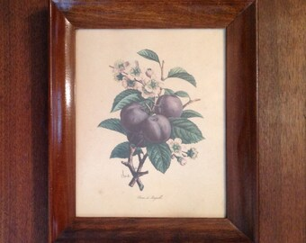 Framed Chirat botanical original lithograph plum fruit print wall hanging art French country farmhouse romantic cottage chic home decor