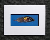 5x7 Yellow Bird on Red Bicycle Painted Feather. Ready to Frame with White and Blue Matting. Original Painting on Guinea Fowl Feather.