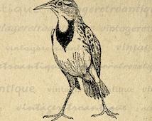 Printable Antique Bird Digital Download Animal Image Graphic Jpg Png Eps 18x18 HQ 300dpi No.256