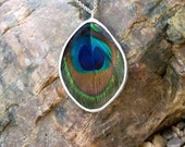 FREE SHIPPING  Real Peacock Feather Encased in Hand Cut Glass and Soldered Pendant Necklace