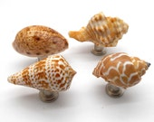 Set of 4 Shell Cabinet Knobs - Set of 4, Cabinet Knob, Fixture, Drawer Pull, Bathroom, Kitchen, Sea Shells, Shell Knobs