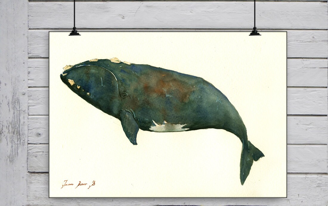 POSTER PRINT Right whale whales