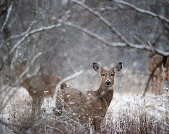 Deer Photography, Deer Art, Fantasy Art, Etherial Art, Photography, Nature Photography, Animal Photography, Winter, Art, Snow, Fine Art