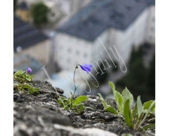 Fortress Flower Photograph