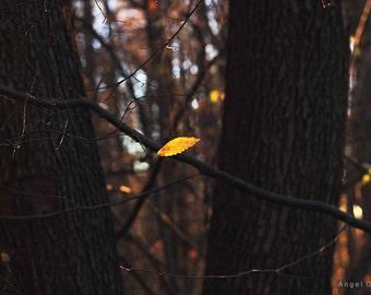 Art picture,Photography,Fine Art Photography,Autumn,Art,Home Decor,Photography,Autumn forest,Leaf,Photo print,Interior Decor Art Photograph