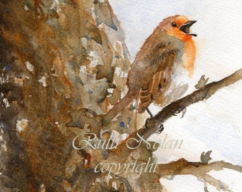 SINGING ROBIN mounted watercolour print by Ruth Nolan