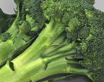 BROCCOLI VEGETABLE SEEDS 100 Fresh seed ready to plant in your garden