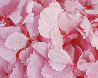 Preserved Hydrangea Stems,  Preserved  Hydrangeas, Pink Hydrangeas
