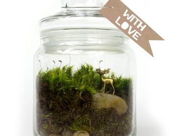 Moss Terrarium // Deer // Gold