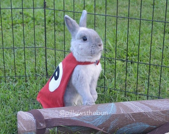 Small animal superhero cape