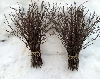Natural birch twigs