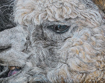 Alpacka - Original Contemporary Acrylic Painting on Canvas by Diane Griffiths