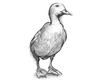 Duck Drawing, Nursery Decor, Duck Print from Charcoal Drawing, Kids Room Art, Animal Drawing, 5 x 7 or 8 x 10