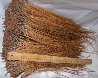 """2.5 lbs Longleaf Pine Needles 9 - 17"""" for Basket Weaving, Coiling, Gourd Crafts, Extra-Long Pine Needles from Southeastern US Longleaf Pines"""