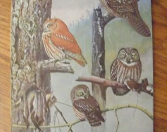 Bird Art Print Owls Vintage Lithograph Double Sided Bird Print Louis Fuertes Snowy Owl Gray Owl Horned Owl Screech Owls