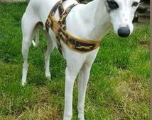 Amazing elegance fashion norway harness anti escape. For greyhounds. For, sighthounds, Italian greyhound, galgo, whippet, saluki, Wolfhoun