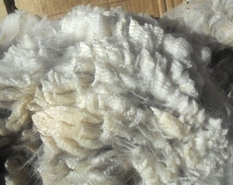CRIMPY, 3 lbs WHITE alpaca fleece, whole