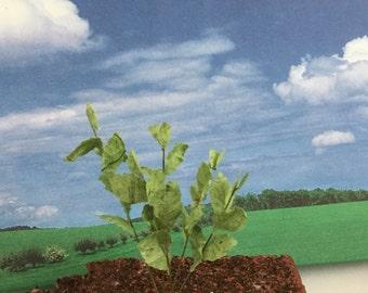 hydrangea leaf stems - miniature