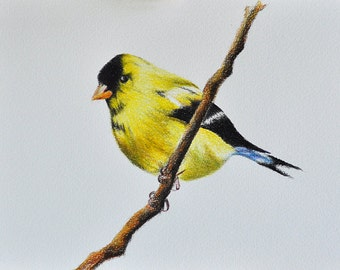 Original Colored Pencil Drawing, Goldfinch Bird Illustration 5.5x8 inch