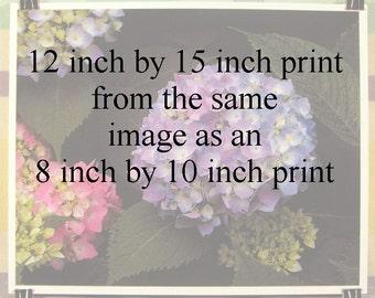 Medium sized print - 12x15 inches