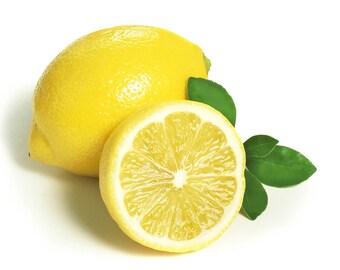 Starter Meyeri Lemon plants, Meyer Lemon Trees - Citrus meyeri - starter plugs