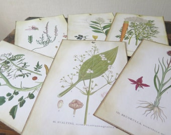 Vintage Botanical Prints Set of 6 Book Plate Plant Prints Vintage Bookplates Collectible Hanging Home Decor Ephemera @302