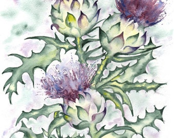 THREE SCOTTISH THISTLES Scotland art print of original watercolour painting heritage thistle emblem watercolor