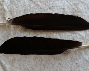 2 Crow Feathers