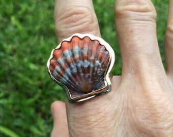 "One ""Rare Red Sunrise Shell Ring"" from Kauai!"