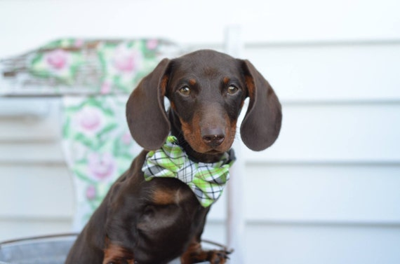 Bow Ties for Dogs on Etsy