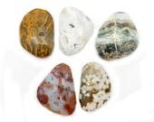 Ocean Jasper Large Tumbled Stones - Chakra - Cabochon - Metaphysical (TS-118-02)